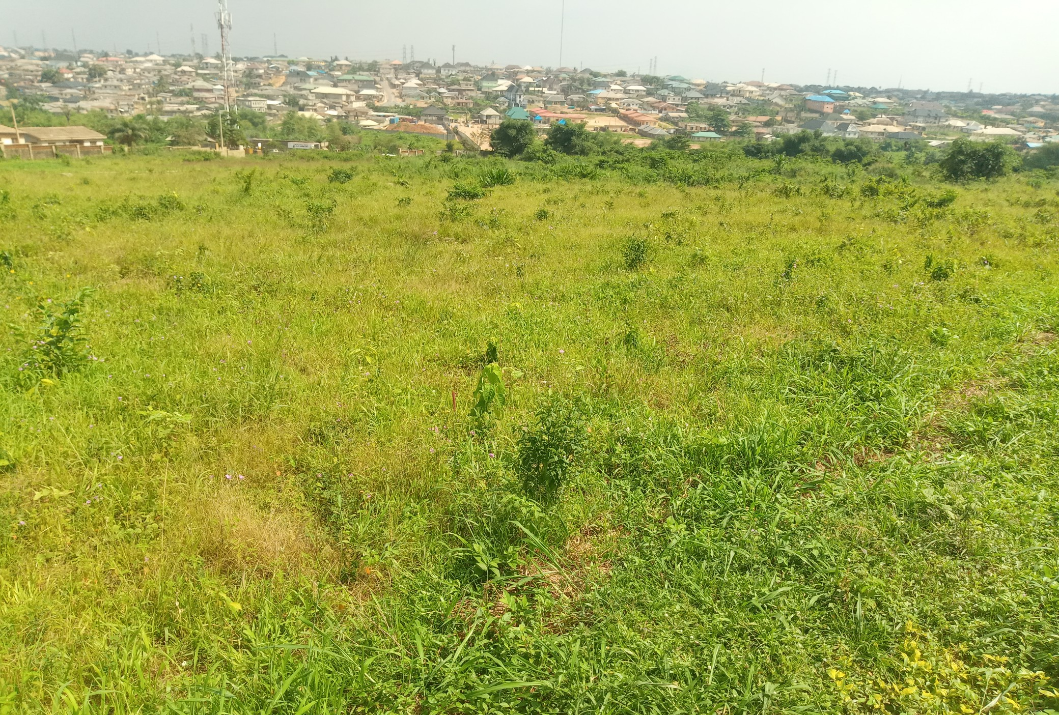 Half plot of land at okeshagun estate, ipaja ayobo area,  Lagos State for sale.
